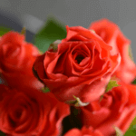 buy roses in wakad from berry's roses and petals - 7030983302 7030983307 - Corvette 150x150 - Buy Roses in Wakad from Berry's Roses and Petals – 7030983302 7030983307