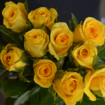 buy roses in wakad from berry's roses and petals - 7030983302 7030983307 - Gold Strike 150x150 - Buy Roses in Wakad from Berry's Roses and Petals – 7030983302 7030983307
