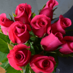 buy roses in wakad from berry's roses and petals - 7030983302 7030983307 - Hotshot 150x150 - Buy Roses in Wakad from Berry's Roses and Petals – 7030983302 7030983307