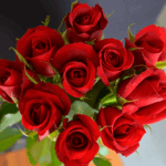 buy roses in wakad from berry's roses and petals - 7030983302 7030983307 - Samurai 150x150 - Buy Roses in Wakad from Berry's Roses and Petals – 7030983302 7030983307
