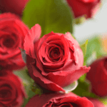 buy roses in wakad from berry's roses and petals - 7030983302 7030983307 - Upper Class 150x150 - Buy Roses in Wakad from Berry's Roses and Petals – 7030983302 7030983307